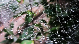 web with raindrops